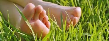 voet gras